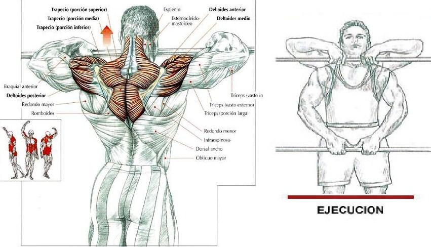 remo al pecho hombros