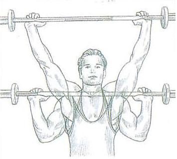 Gimnasio, Aumenta tu Masa Muscular con este Post.