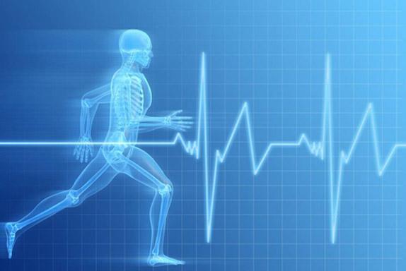 Resultado de imagen de adaptaciones al ejercicio
